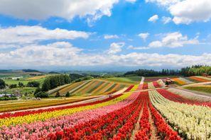Biei (Hokkaido)