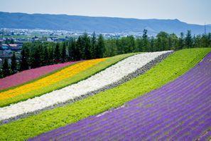 Furano (Hokkaido)