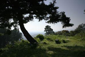 Sakado (Saitama)