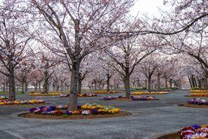 Sakura (Chiba)